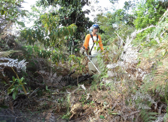 Reforestation of PESC and the Region